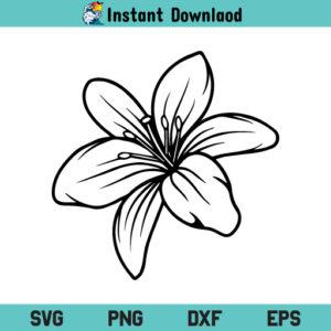 Lily Flower SVG, Lily SVG, Flower, Lily Flower Clipart, Lily Flower SVG Cut File, Lily, Flower, SVG, PNG, DXF, Cricut, Cut File